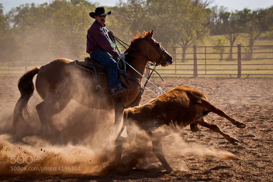 Rancher Thomas Saunders ropes a calf
