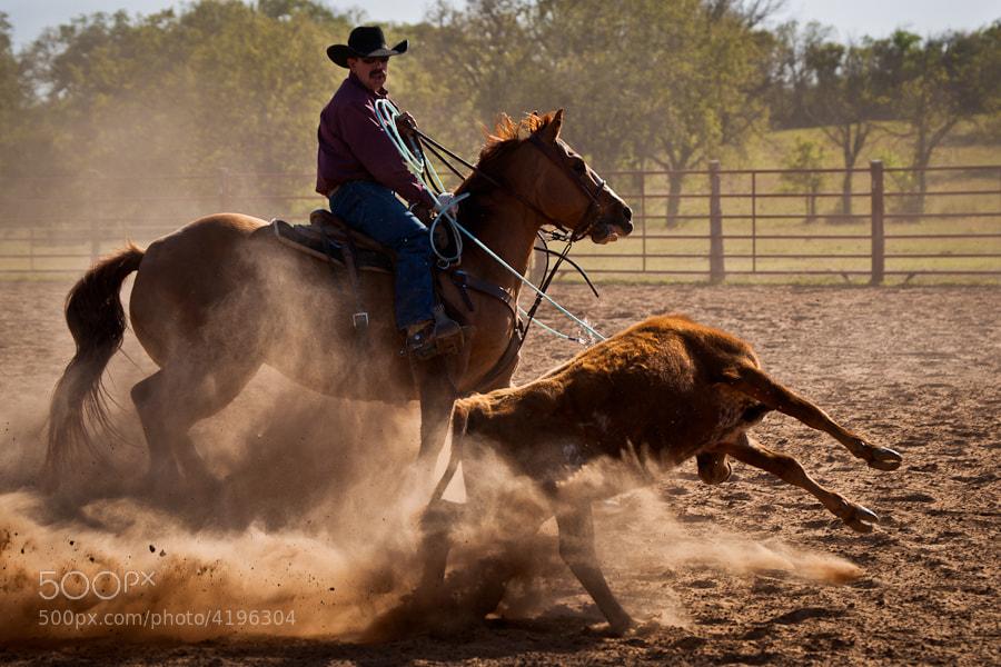 Rancher Thomas Saunders ropes a calf