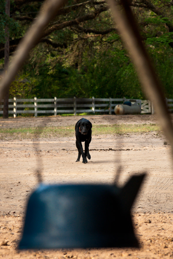 Image of a dog seen through a water kettle hanging over a camp fire