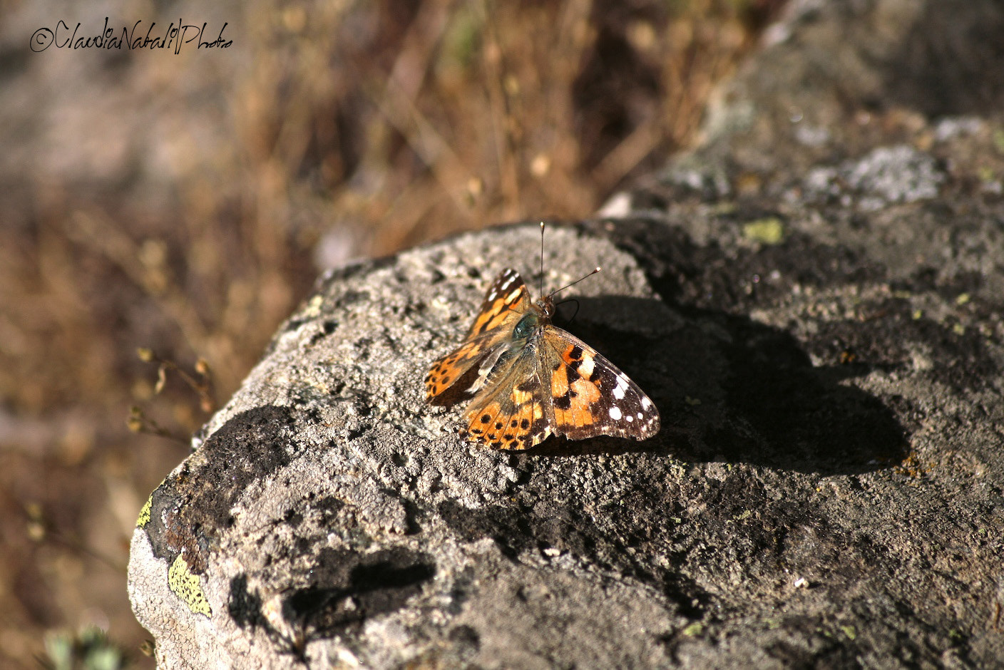 Photograph Butterfly by claudia natali on 500px