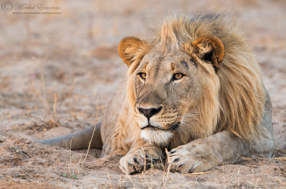 Photograph The Look by Morkel Erasmus on 500px