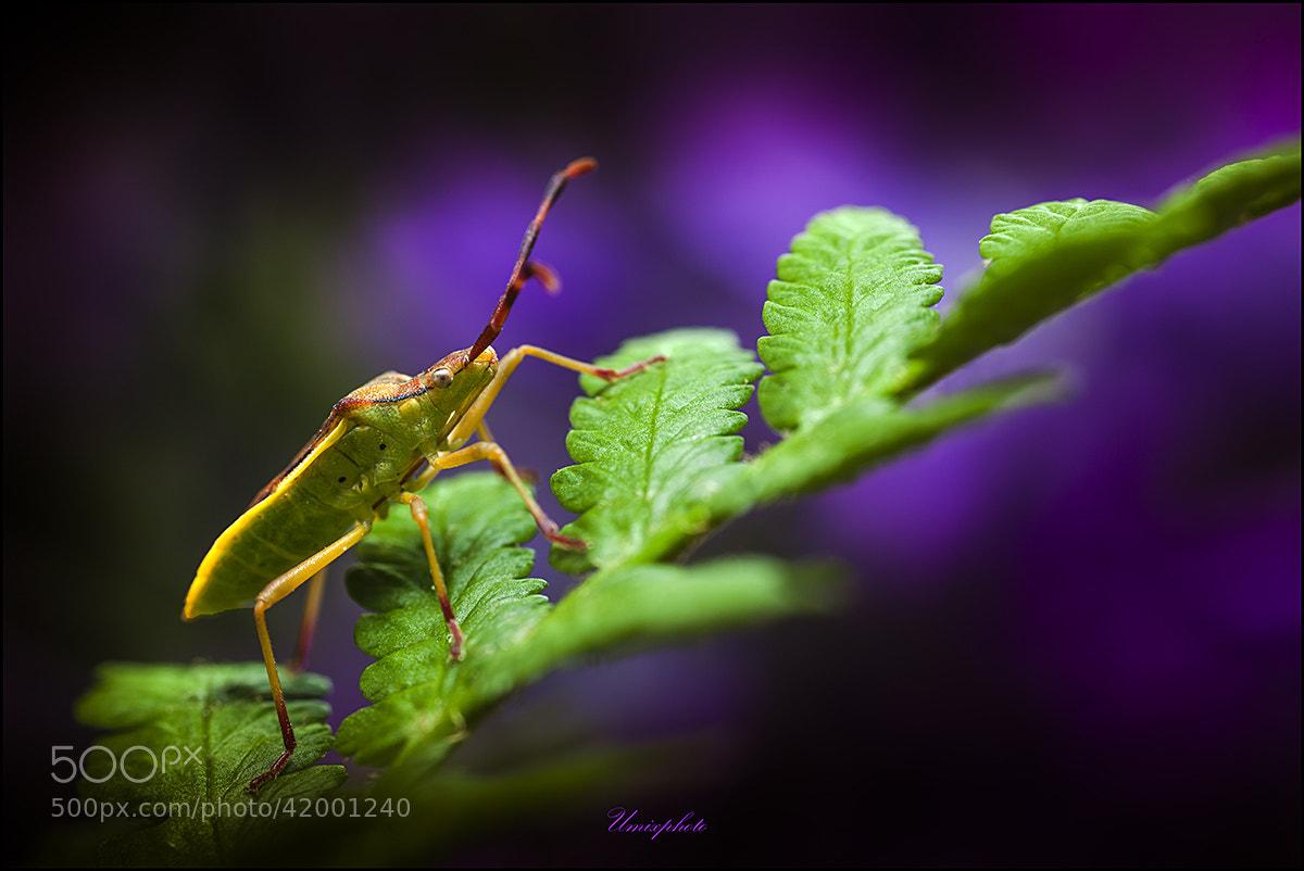 Photograph Little Monster by Jaro Miščevič on 500px
