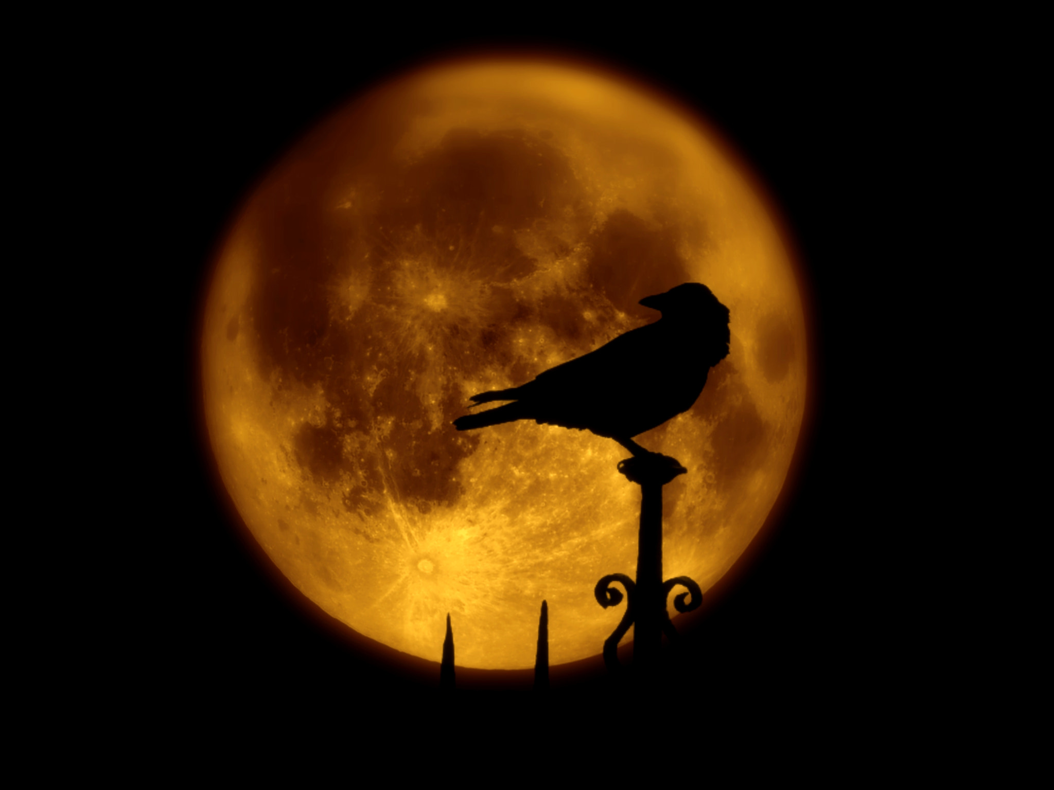 Photograph Crow and moon by Schipor Catalin on 500px