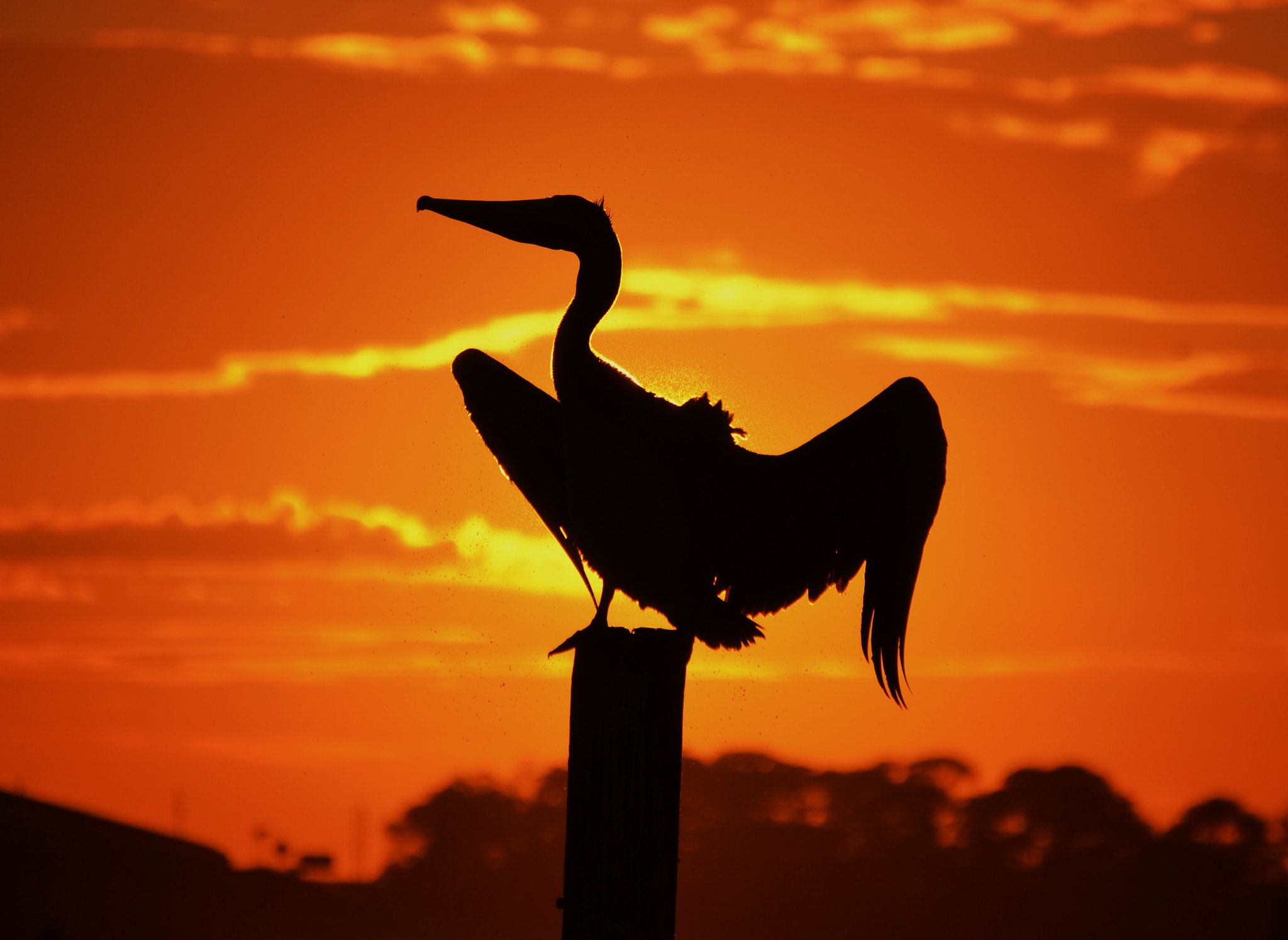 Photograph Avian Eclipse by Michael Fitzsimmons on 500px