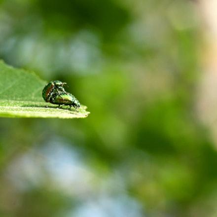 Beetle love