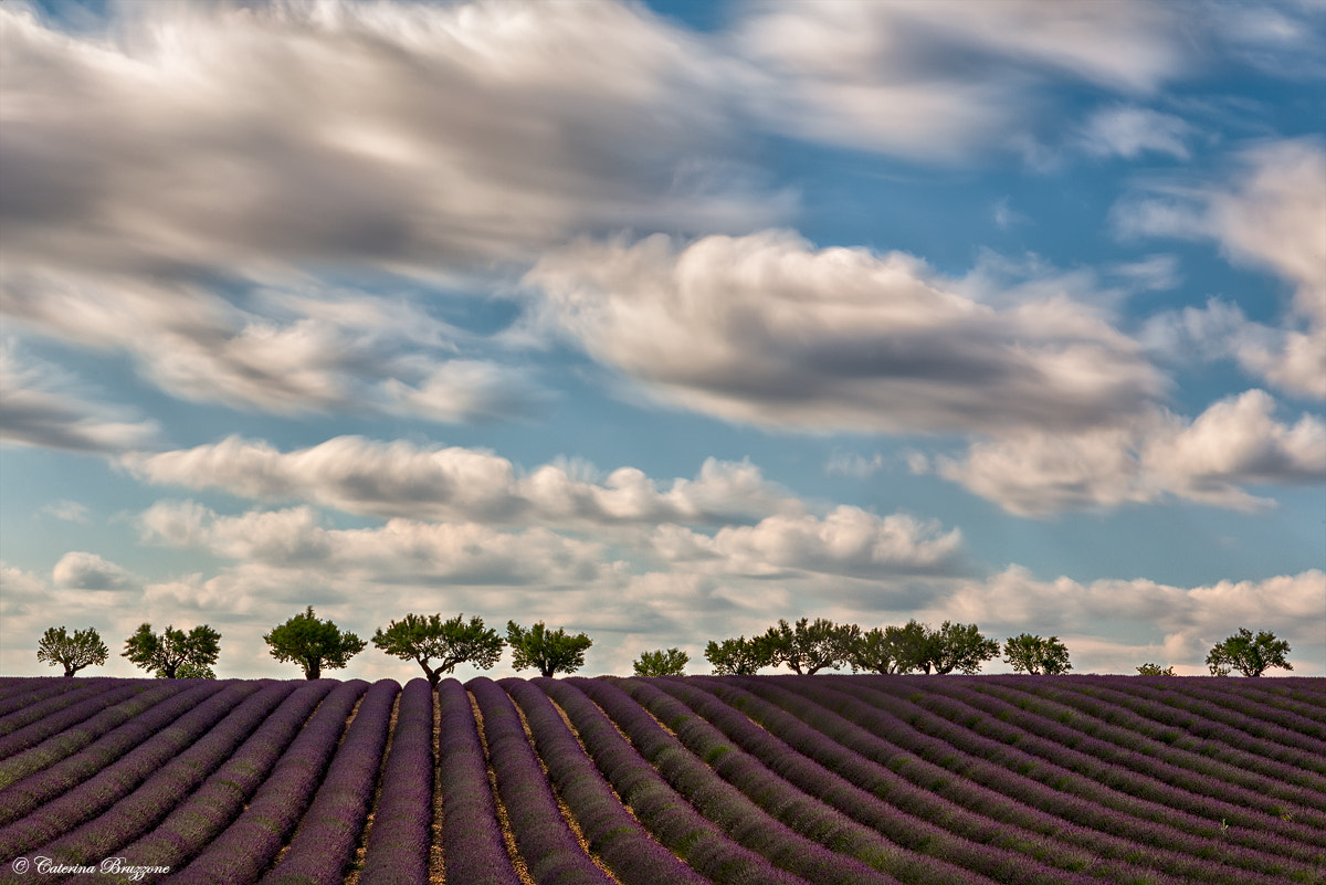 Photograph lavender and clouds by Caterina Bruzzone on 500px