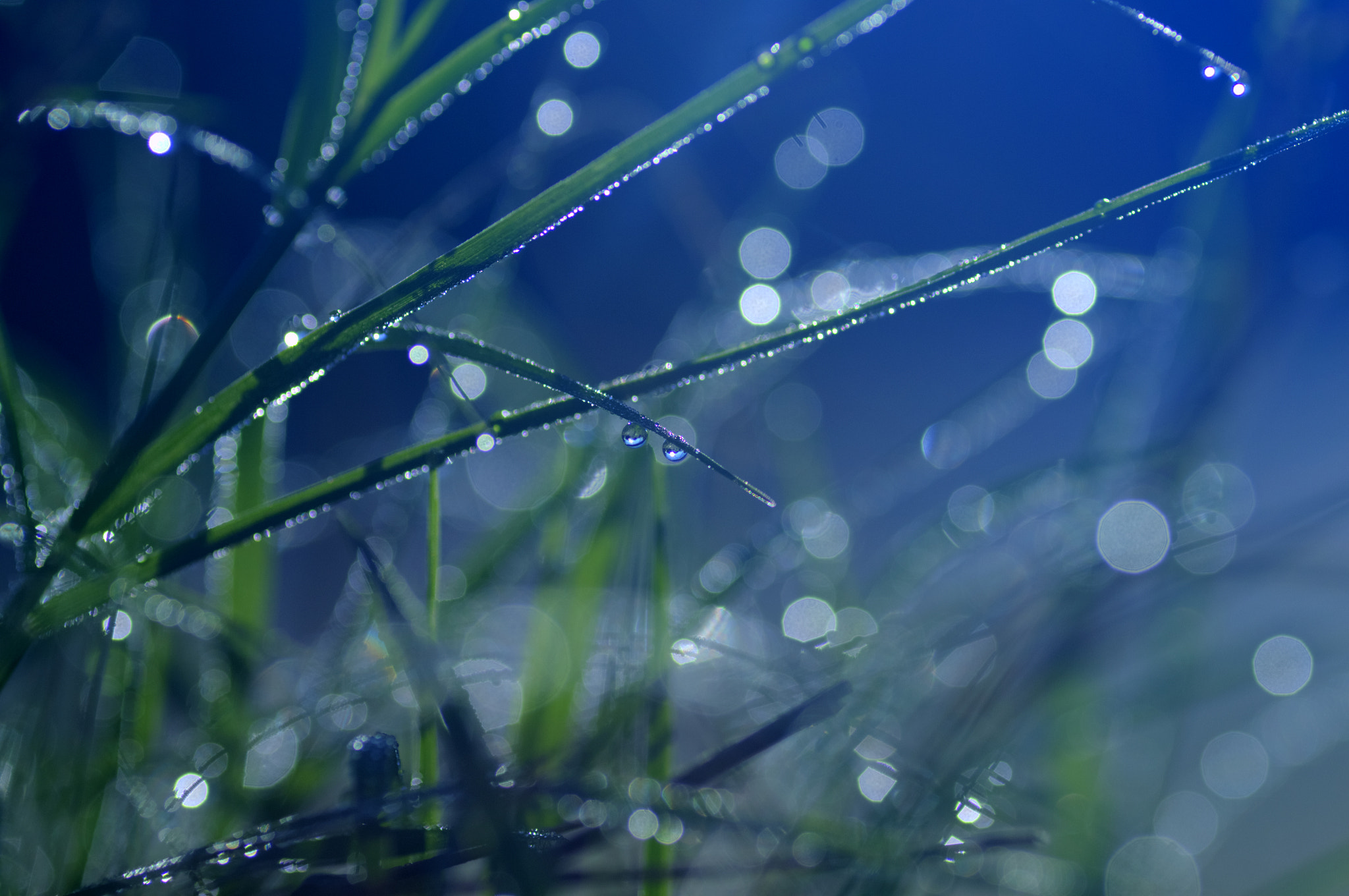 Photograph Morning Dew by James Gramm on 500px