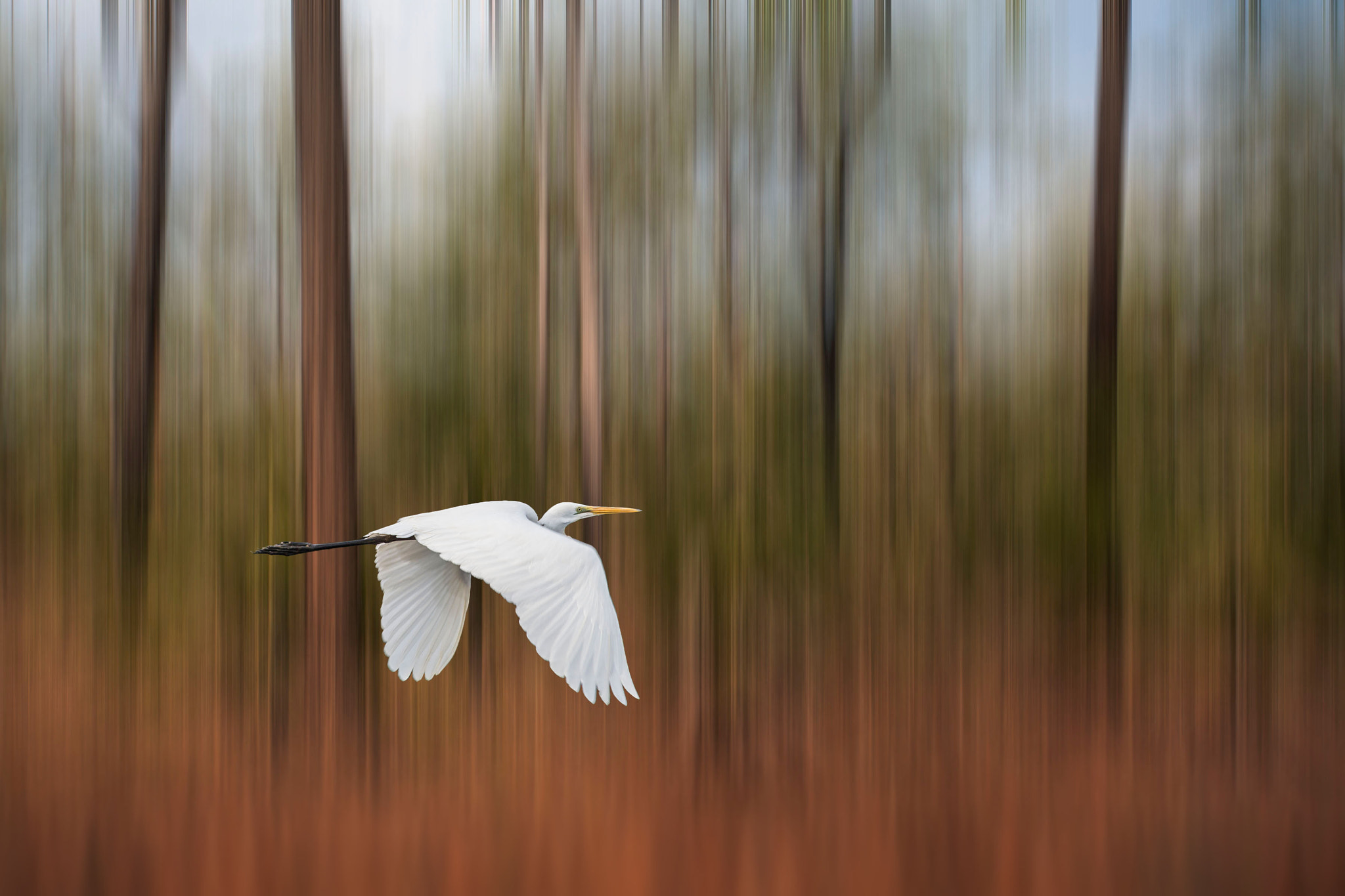 Photograph Fly Away by Margaret Morgan on 500px