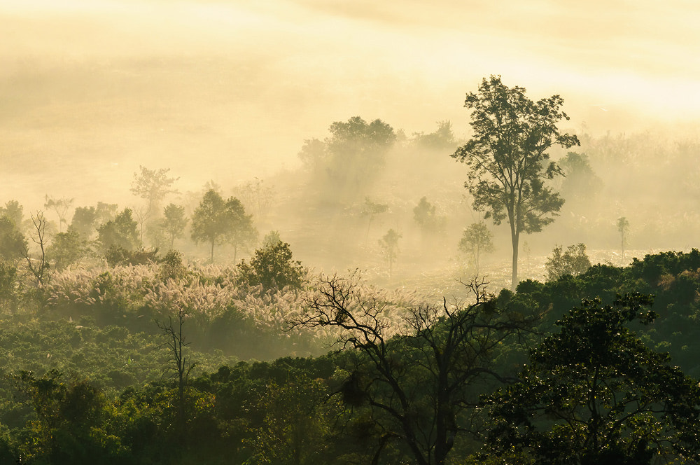 Photograph Natural light fog in the morning by real chi on 500px