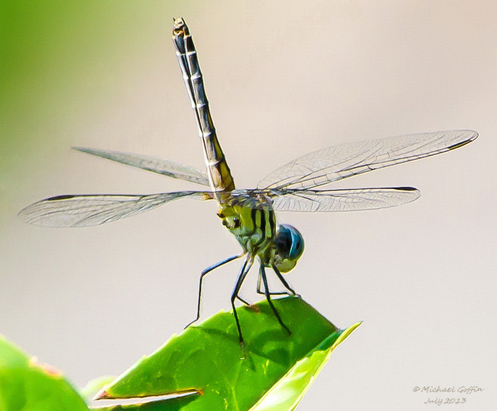 Photograph Perched on a Leaf by MICHAEL GOFFIN on 500px