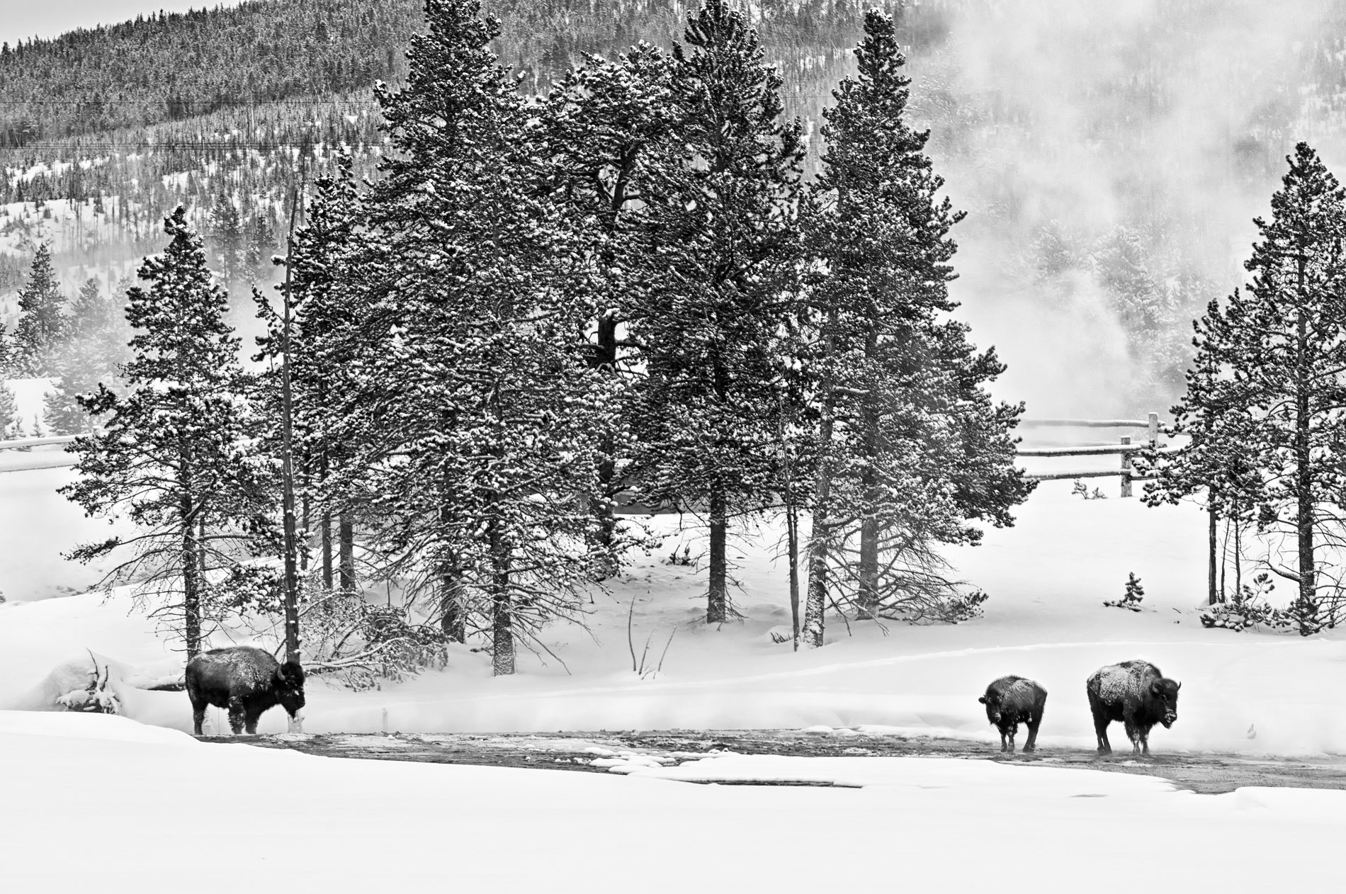 Photograph Yellowstone by Scott Spagnoli on 500px