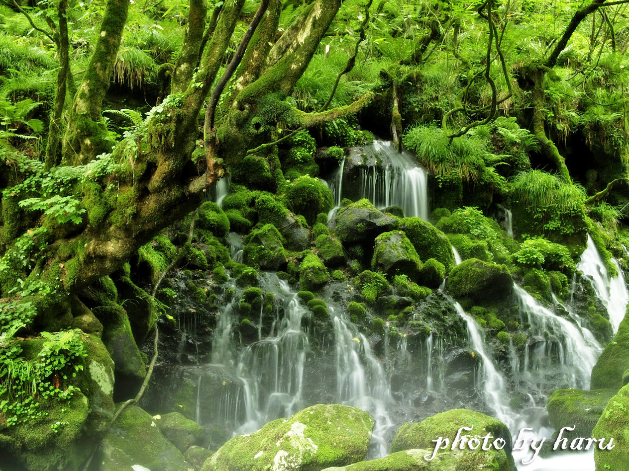 Photograph Green forest by Haru Nature photo on 500px
