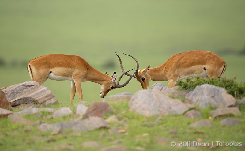 Photograph Impala by Dean Tatooles on 500px