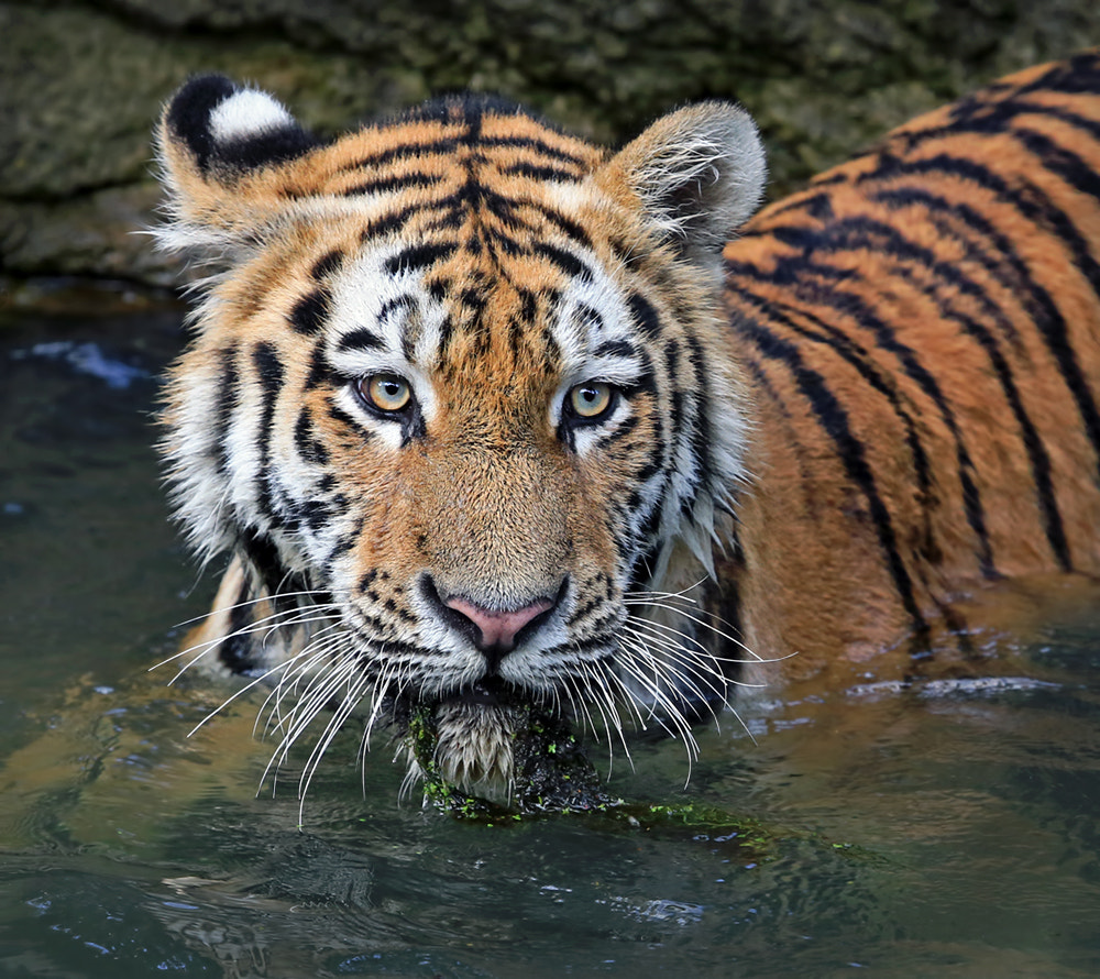 Photograph Playing by Klaus Wiese on 500px