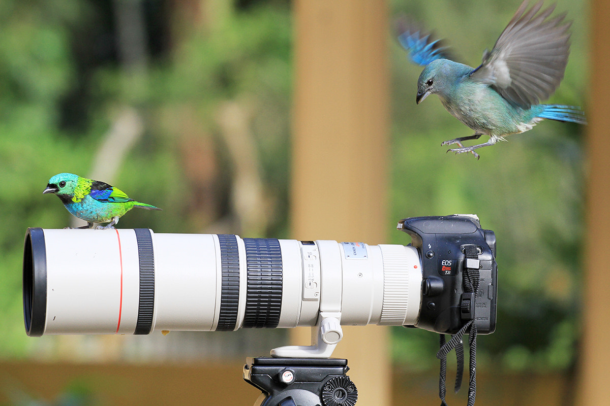 Photograph Landing  approach ! by Itamar Campos on 500px