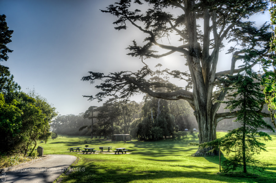 Photograph Golden Gate Park by Carles Alonso on 500px