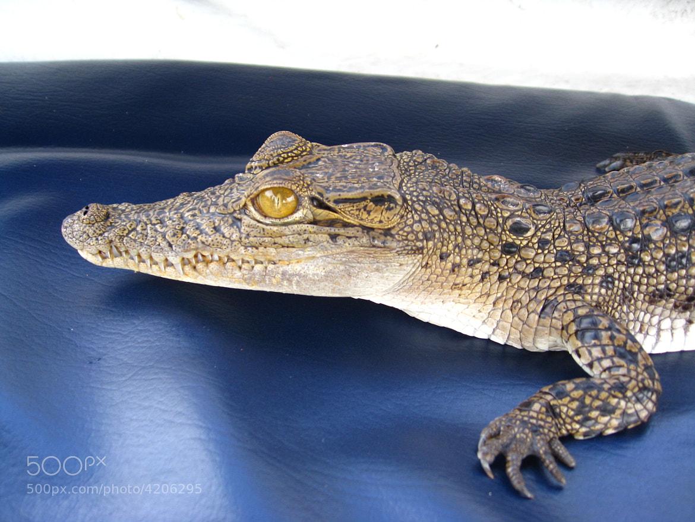 Photograph mini crocodile by Dmitry Os on 500px