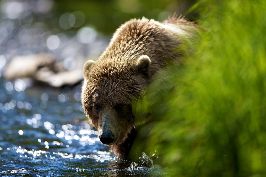Photograph Sneaking Up by Buck Shreck on 500px