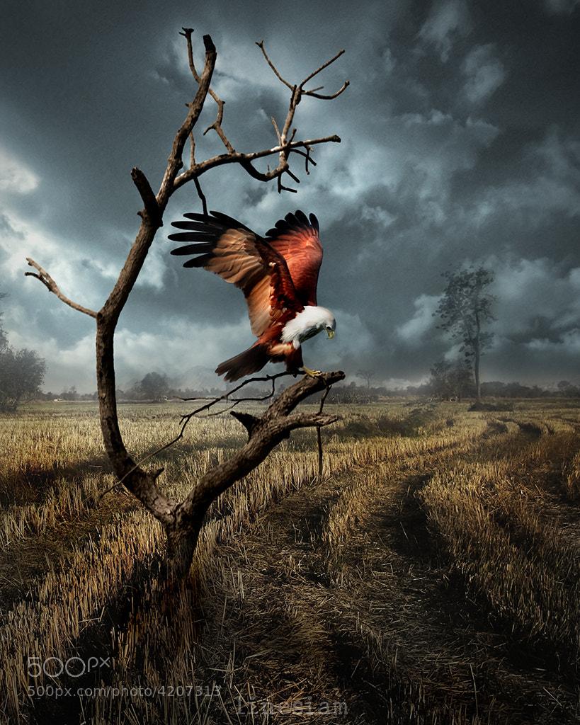 Photograph The Raptor by Anuchit Sundarakiti on 500px