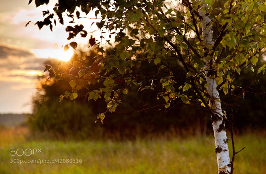 Sunset by Vladimir S. on 500px.com