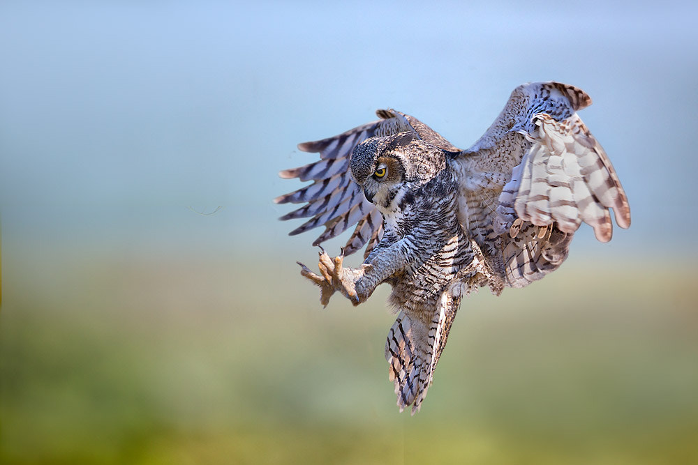 Photograph Untitled by Stefano Ronchi on 500px