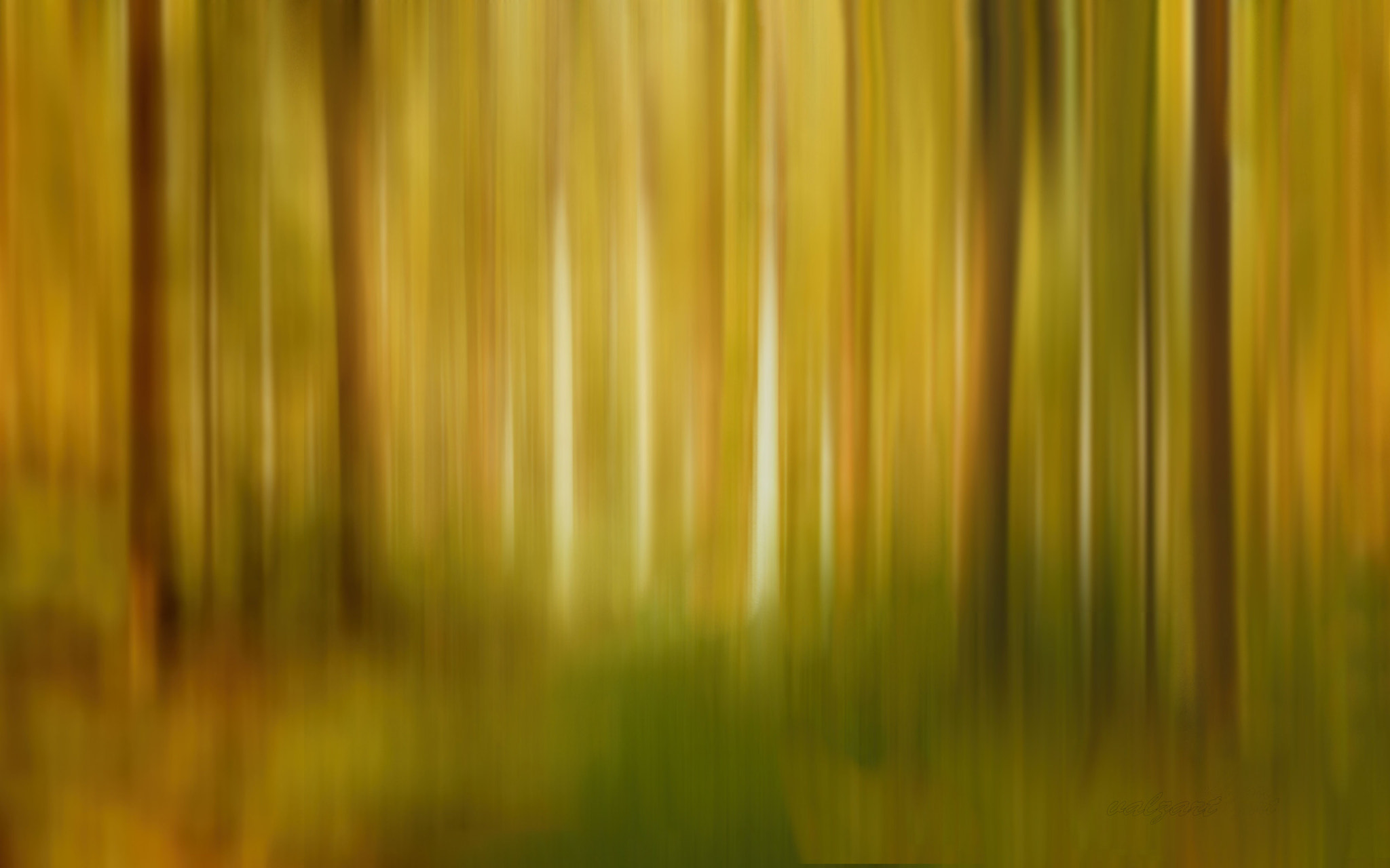 Photograph Forest light by Valerie Anne Kelly on 500px