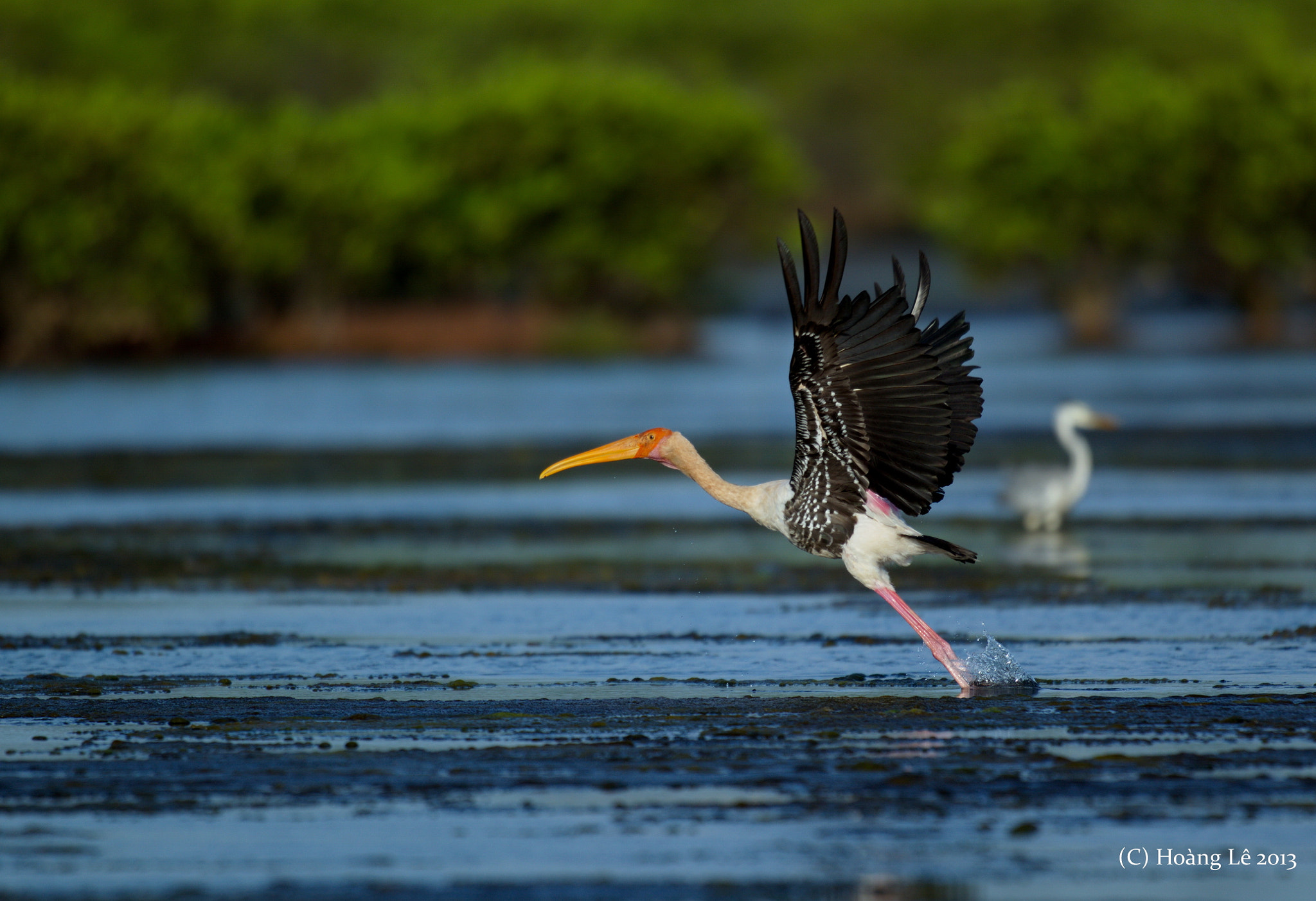 Photograph Taking off Painted Stork by Le Viet Tuan  Hoang on 500px