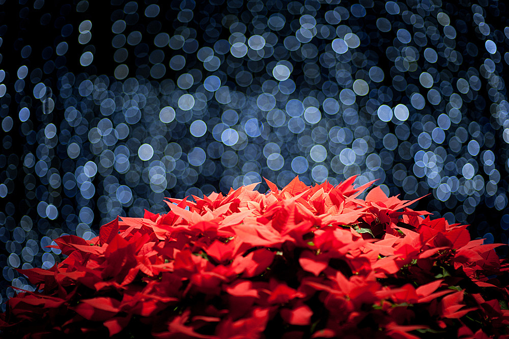 Photograph Stars fall on Longwood Gardens by Guanglei Cui on 500px