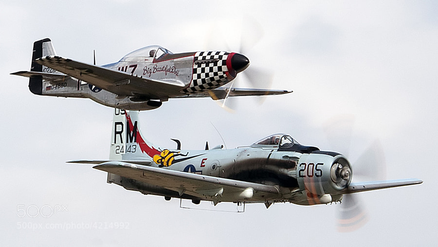 At the very end of the 2011 Duxford Legends air show there was a mid-air collision between the P-51 Mustang called Big Beautiful Doll and a Skyraider.    The P-51 didn't survive the mid-air but the pilot was able to parachute to safety before the crash. The Skyraider was able to recover and land.   This photo showing both planes flying in close formation was taken less than a minute before the mid-air collision.