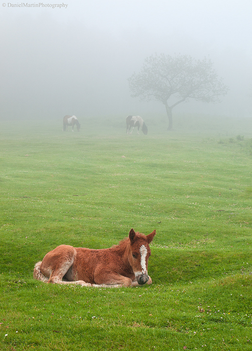 Photograph resting on the fresh grass by Daniel Martin. on 500px