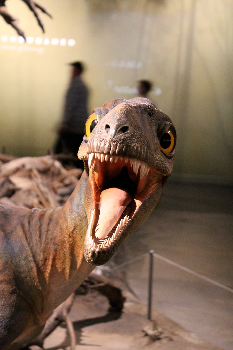 Photograph Dinosaur by Adelka Molcan on 500px
