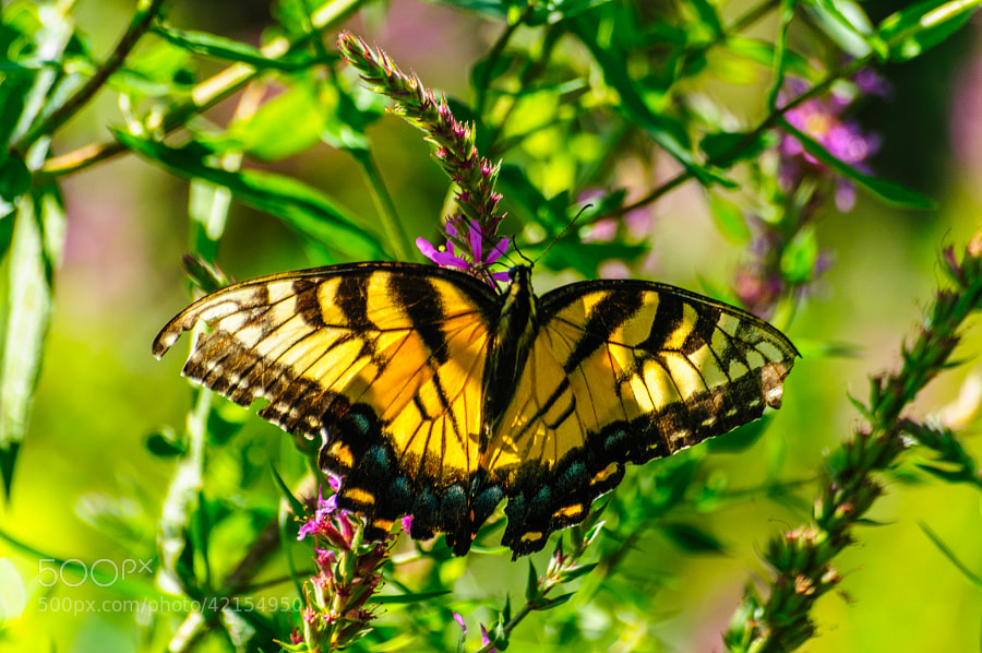 Love the sun reflecting through the Butterfly