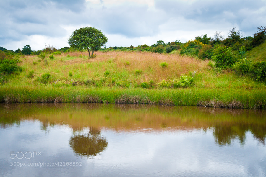 Photograph Tree Reflections by Jose Agudo on 500px