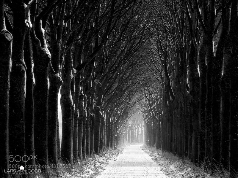 Photograph dark lane by Lars van de Goor on 500px