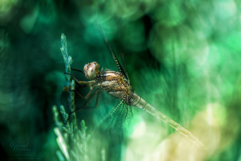 Photograph Hidden dragonfly by Norbert G on 500px
