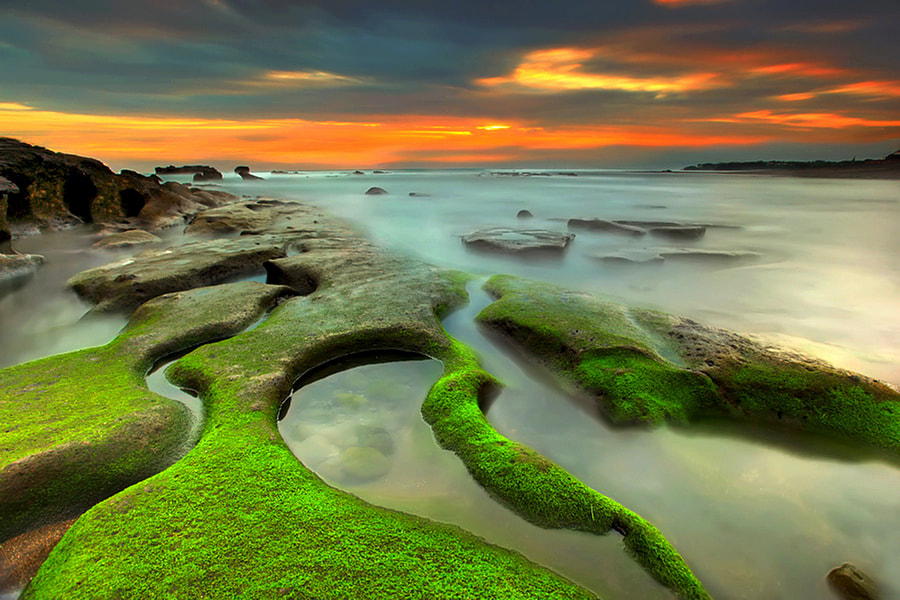 Photograph Green Lines by Agoes Antara on 500px