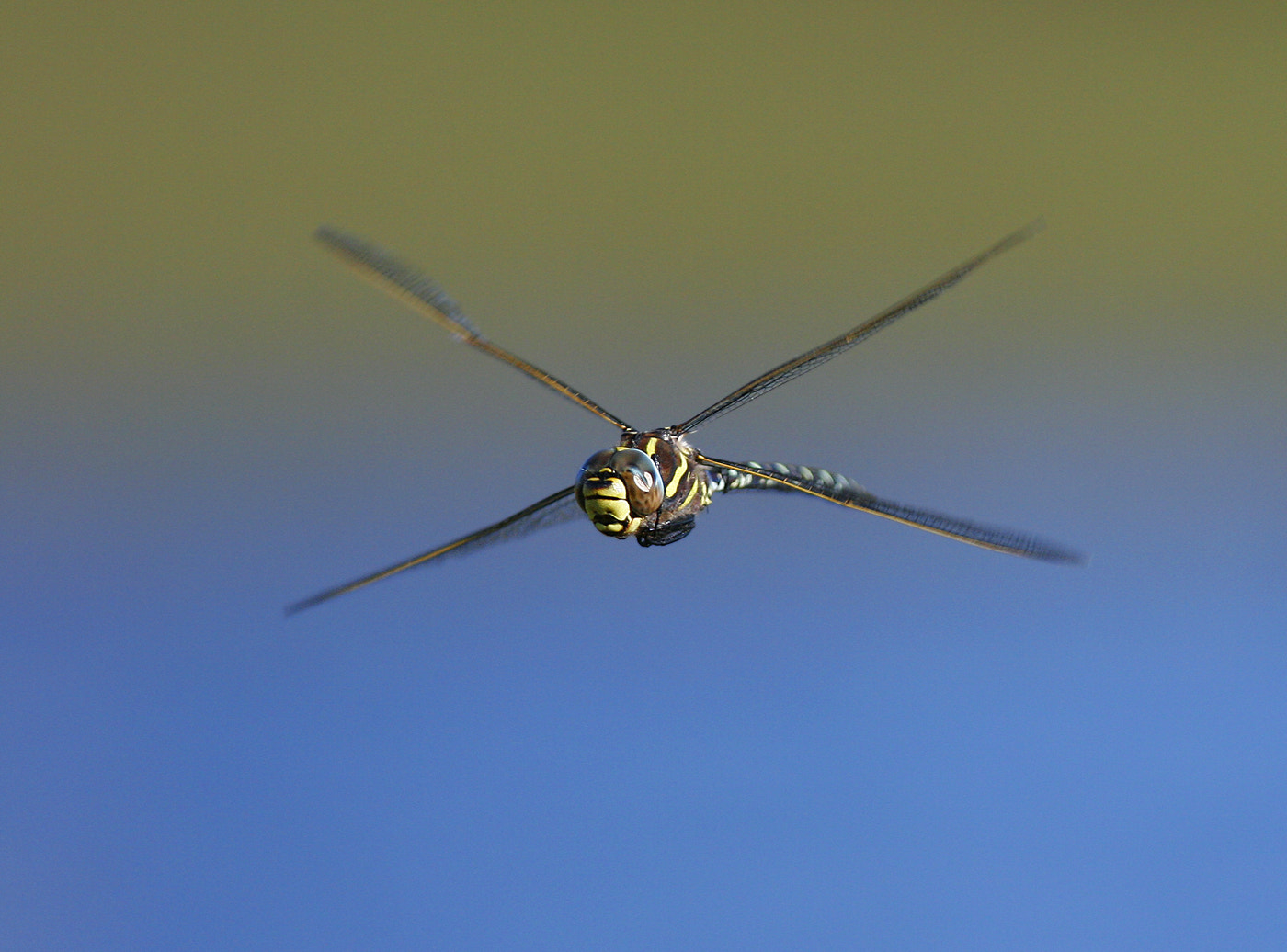Photograph X wing by Vic.  Parsons. on 500px