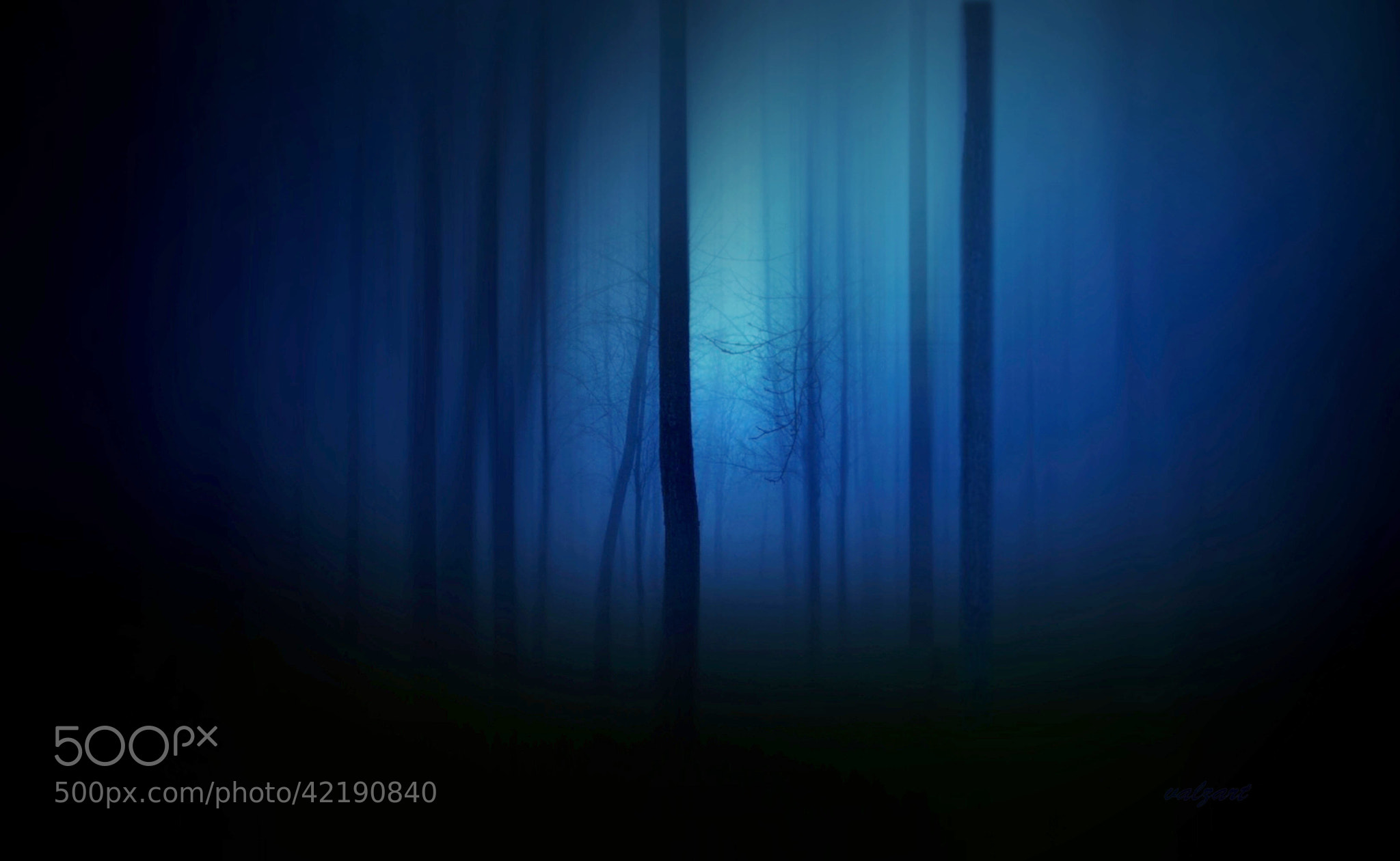 Photograph Forest in blue by Valerie Anne Kelly on 500px