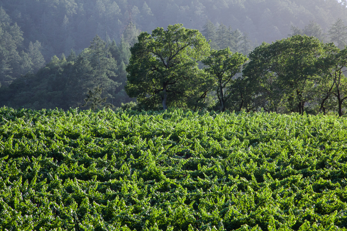 Photograph Wine in the making by Jonathan Howard on 500px