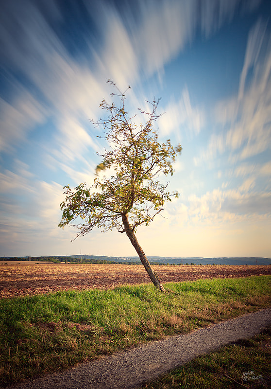 Photograph the lonely tree 05 by Max Ziegler on 500px