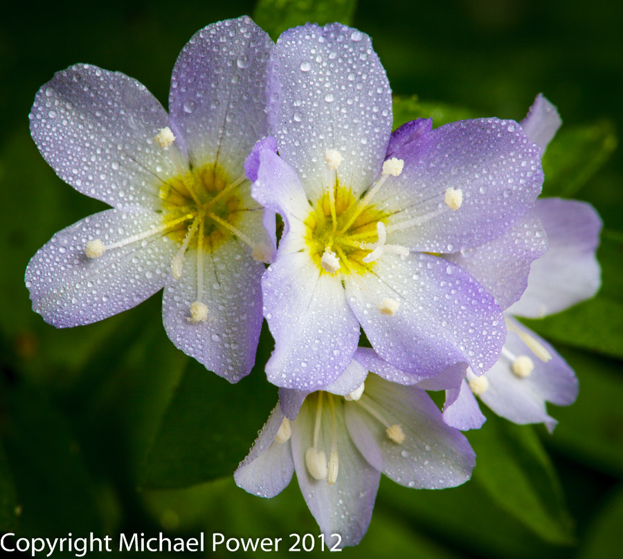 Photograph Showery morning by Michael Power on 500px