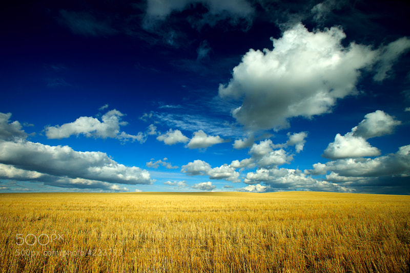 Photograph Big Fluffy Clouds by Todd Klassy on 500px