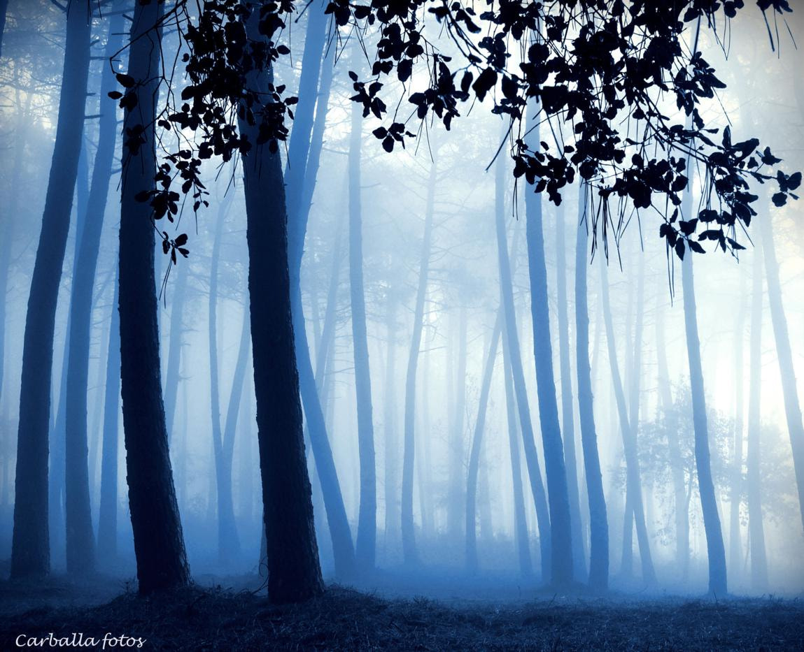 Photograph Blue morning,blue day by Guillermo  Carballa on 500px