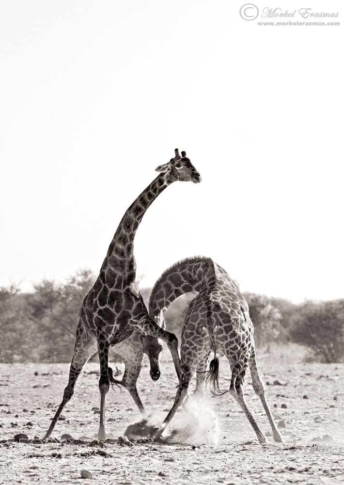Photograph Some Necking by Morkel Erasmus on 500px