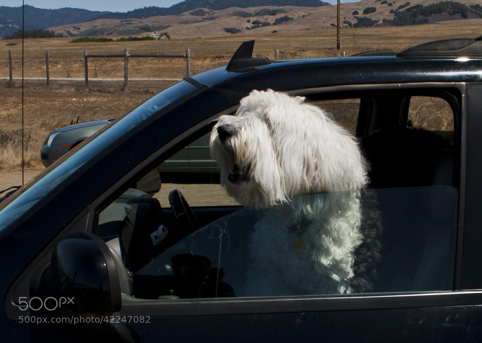Photograph Happy dog by Kira Saprykina on 500px