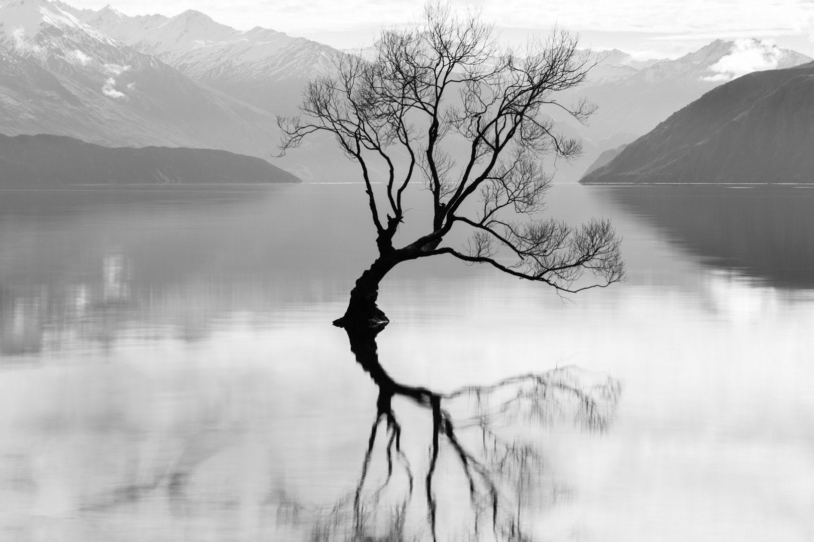 Photograph Wanaka Tree by Paul Conroy on 500px