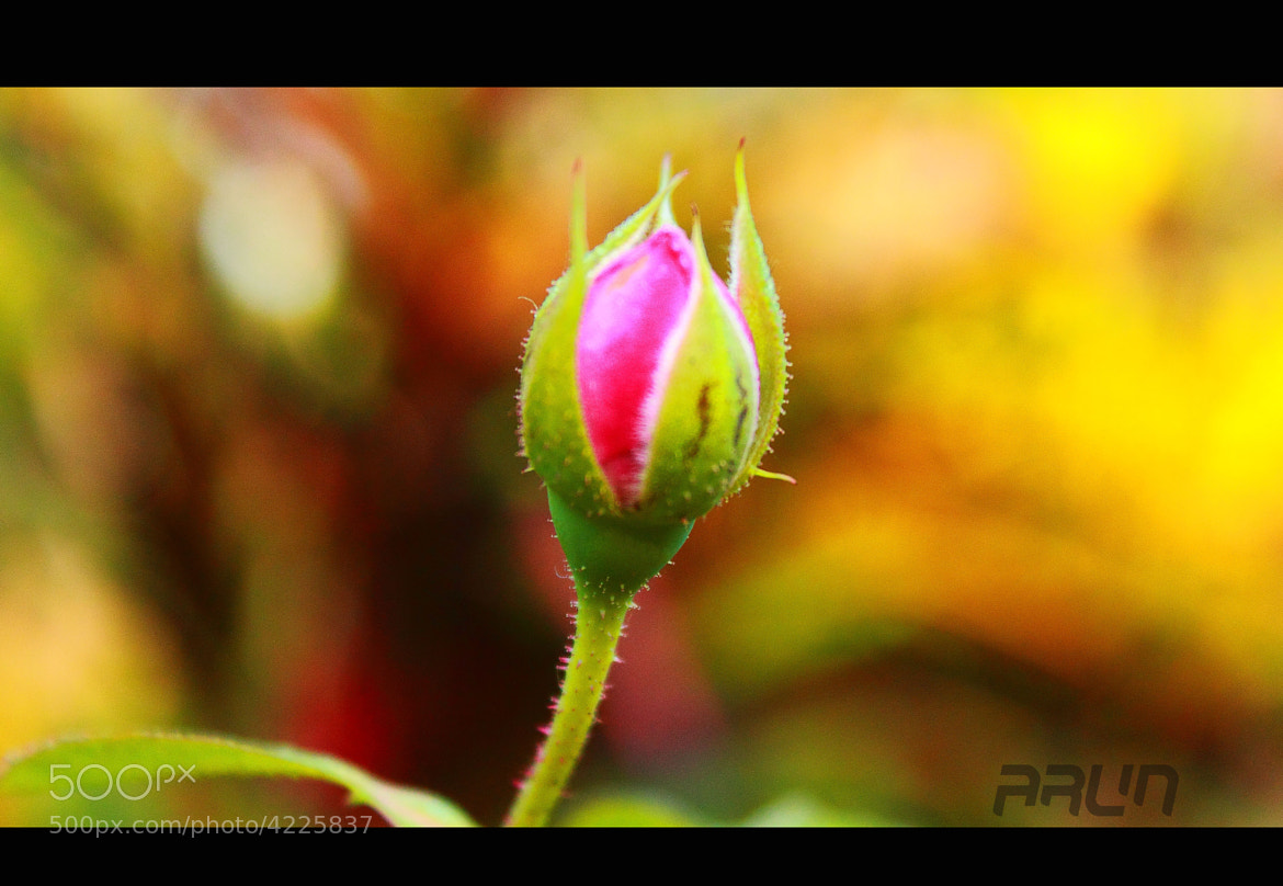 Photograph Untitled by Arun P. Nair on 500px