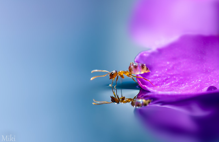 Who are you? de Miki Asai sur 500px.com
