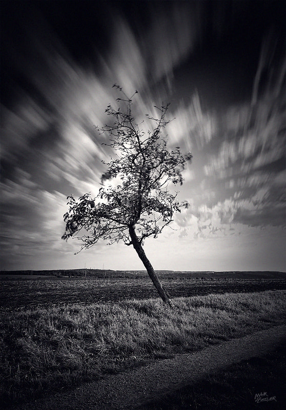 Photograph the lonely tree 05 b&w by Max Ziegler on 500px