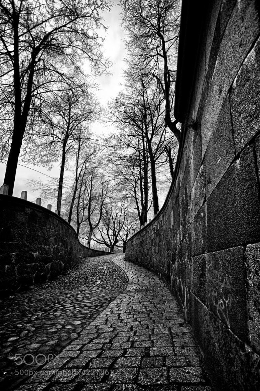 Photograph Untitled by Aleksandr  Zychkov on 500px